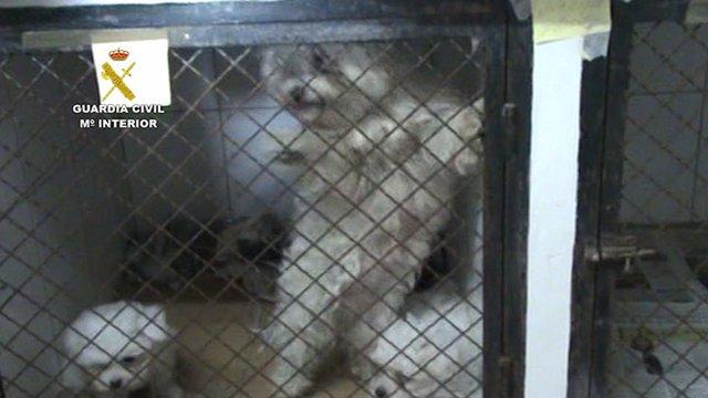 Perros intervenidos en Paracuellos del Jarama