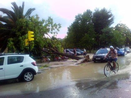 Los servicios municipales reciben 333 avisos de retirada de árboles relacionados con la tormenta