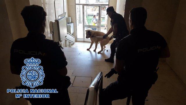 Policía inmoviliza a un perro fuera de control