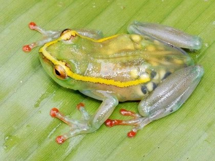 Así lucen 14 animales en periodo de gestación y antes de parir