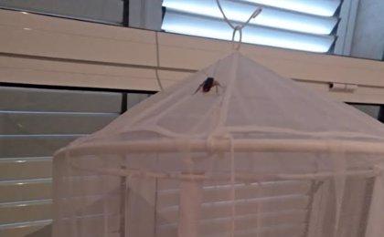 El Arnau de Vilanova asegura que la plaga de cucarachas en L'Eliana no solo afecta al ambulatorio