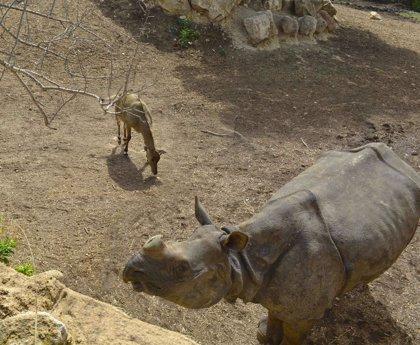Un estudio de Terra Natura descubre las bondades del estiércol de elefantes y rinocerontes