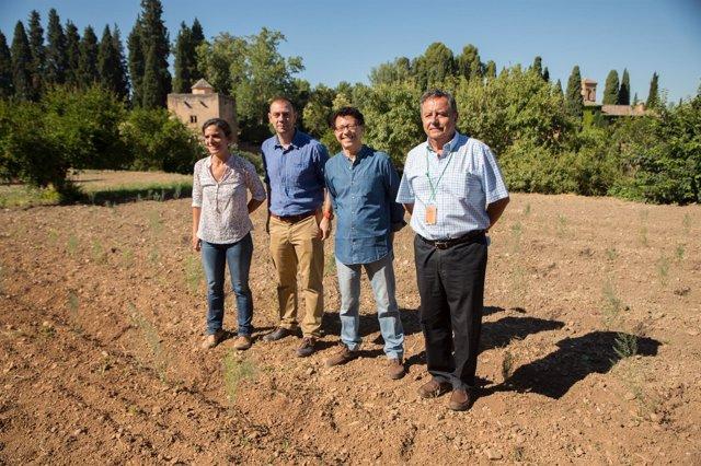 La Alhambra recupera el espárrago verde