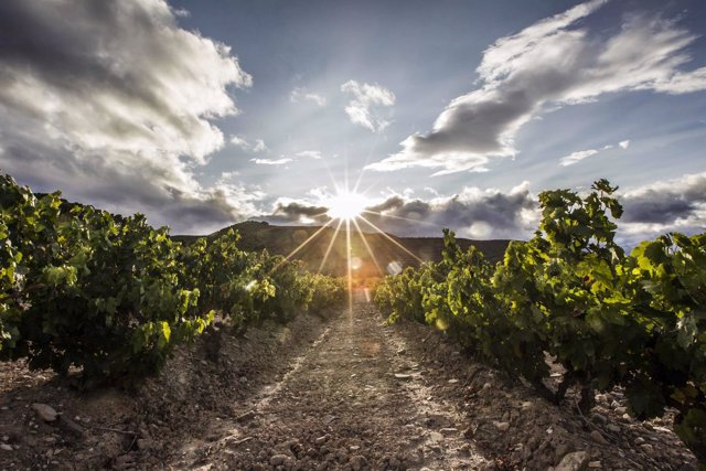 Imagen de un viñedo de la DOCa Rioja