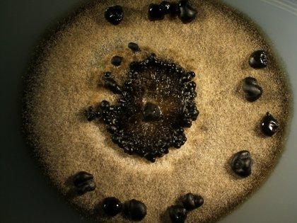 Fundación Medina explora la diversidad andaluza de hongos en busca de moléculas con actividad antifúngica y antitumoral