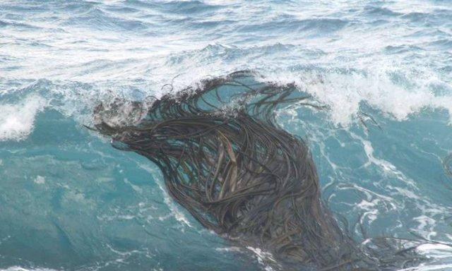 Balsas biológicas de algas