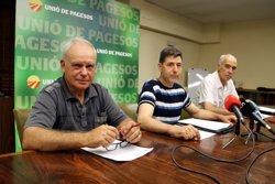 UP tem que el creixement del mercat mundial de porcí disminueixi el marge dels productors catalans en el segon semestre (ACN)