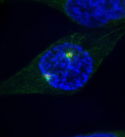 Investigadores revelan mecanismos inesperados que gobiernan a proteínas y células