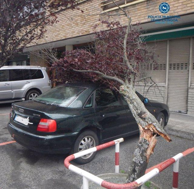 Un árbol caído sobre un coche.