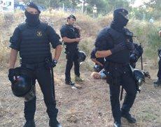 Una detinguda en el desallotjament d'una pineda de Castelldefels que s'urbanitzarà (Europa Press)