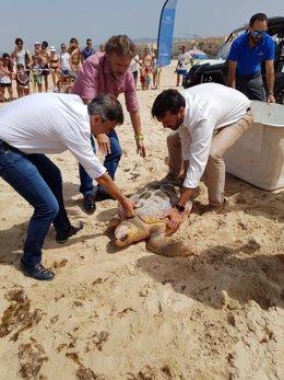 José Fiscal liberando una tortuga boba en Tarifa