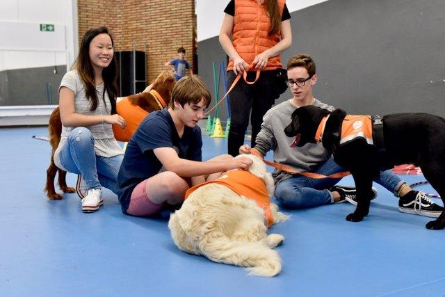 Programa para prevenir el bullying mediante terapia de perros