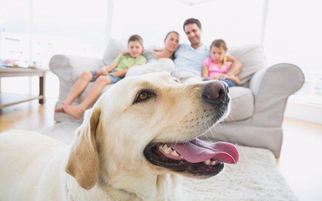 Planes con tu perro: excursiones en el campo, playa y ciudad