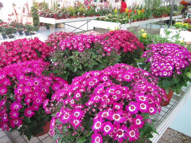 Flores, vivero de flores