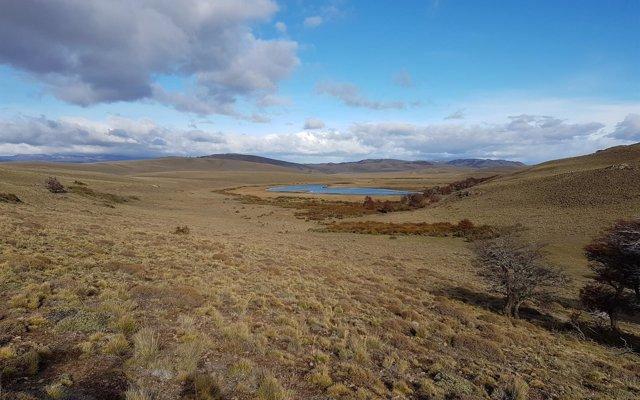 Familia Torres plantará árboles en la Patagonia chilena para mitigar efectos del cambio climático