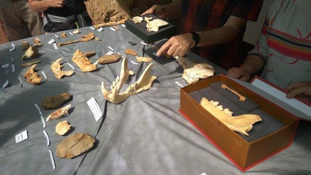 Restos encontrados en las últimas excavaciones en Atapuerca