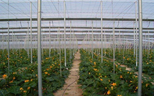Relacionan la abundancia de arañas con el control de plagas en cultivos de invernadero