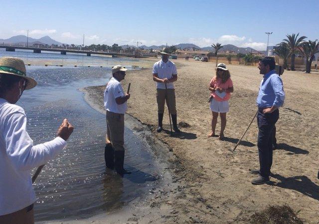 Las mejoras en las brigadas de limpieza del mar menor for Trabajo de limpieza en murcia