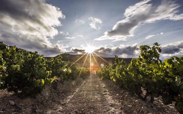 Grupo Rioja apuesta por el stock cualitativo como medida para afrontar las diferencias de producción entre vendimias
