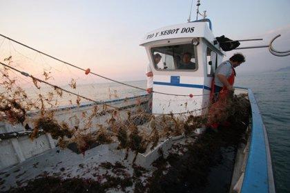 España y Portugal presentan medidas para evitar el cierre de la sardina
