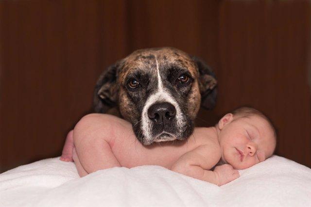 Perro y recién nacido, mascota