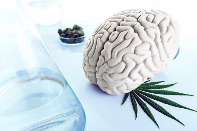 Drogas y cerebro, cannabis