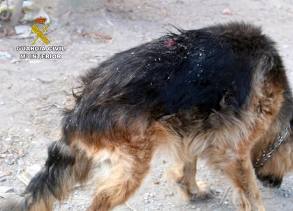 Guardia Civil investiga a un vecino de Águilas por presunto delito de abandono animal