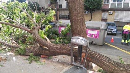 """PP exige al alcalde de Sevilla la """"revisión inmediata"""" de los árboles en nivel 3 tras los """"incidentes"""" en Triana"""
