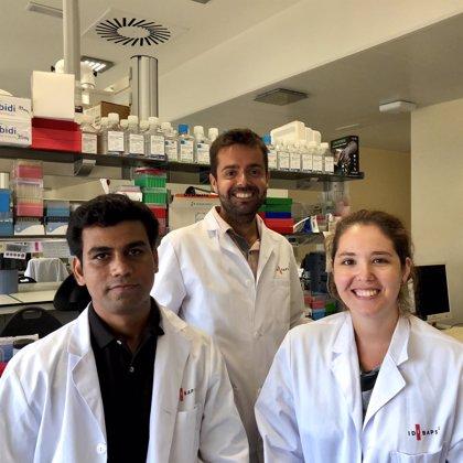 Demuestran en ratas la eficacia de las estatinas en las fases más avanzadas de la cirrosis