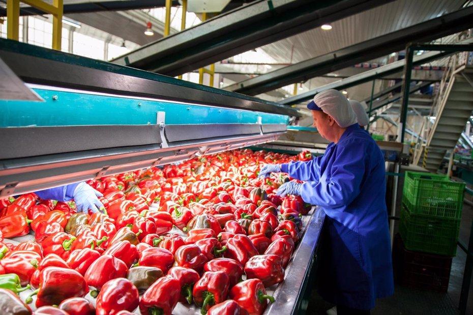 Foto: Almería cierra su campaña con caída de precios y menos producción con respecto a la anterior (EUROPA PRESS)