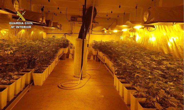 Plantación de marihuana en una nave del polígono de Son Noguera (Mallorca)