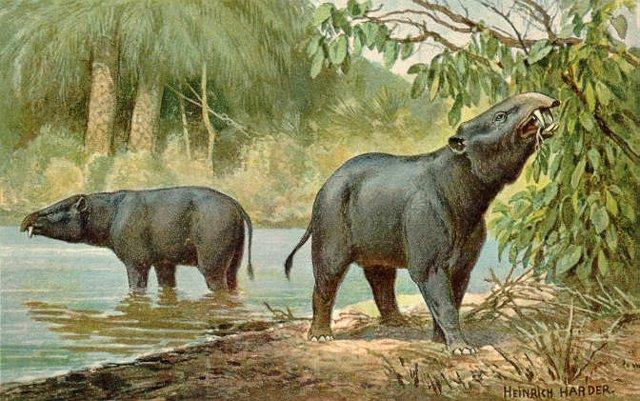 Animales del Paleógeno