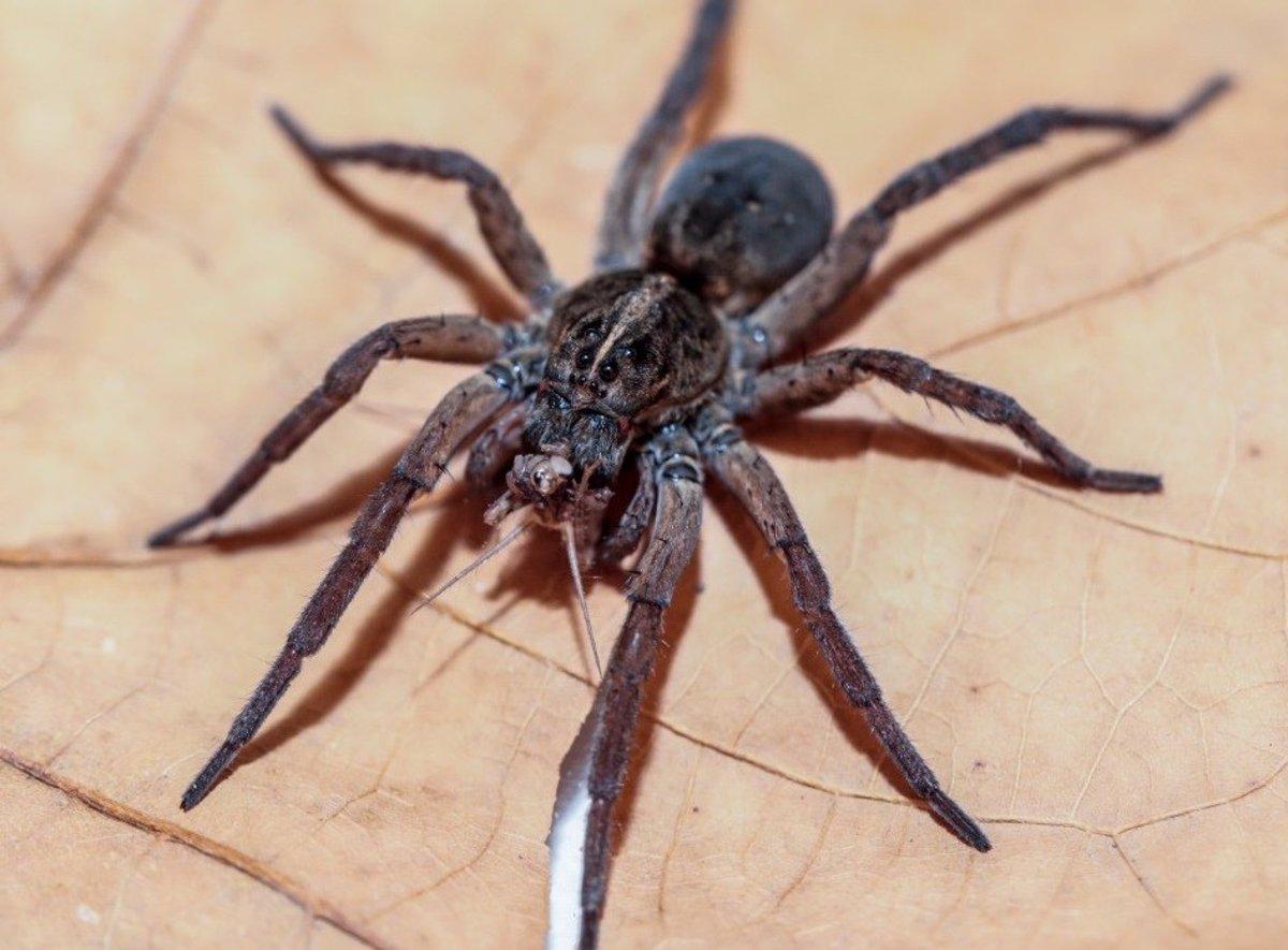 Arañas: las buenas y las malas noticias