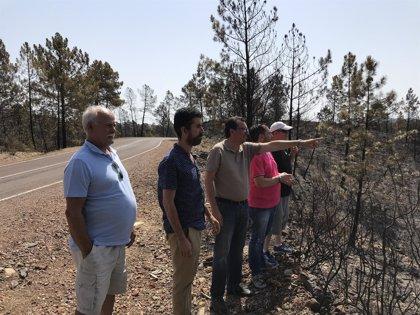 """PP lamenta que Junta no haya trabajado """"con premura suficiente durante el año"""" para prevenir incendios"""