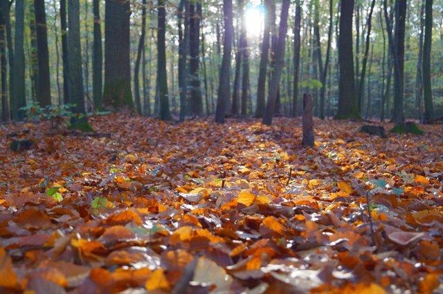 Hojas en un bosque
