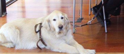 ONCE confía en que la ley de acceso de perros de asistencia se apruebe por unanimidad