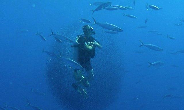 Submarinista rodeado de un banco de peces