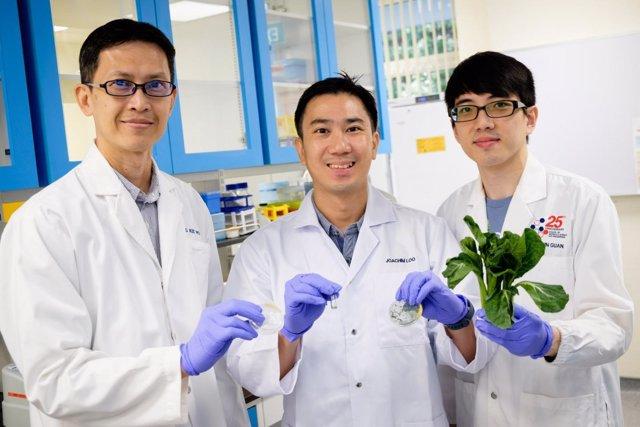 Científicos descubren que las nanofibras son más efectivas contra la grasa