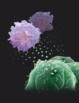 Exosomas de células tumorales (arriba) luchan contra las (células T)