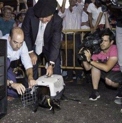 La Asociación para el Respeto Animal insiste en la cancelación de 'La Gata Negra'
