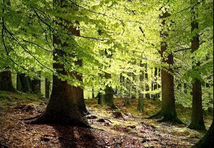 Un nuevo bosque de 4.800 árboles en Villaverde a orillas del Manzanares actuará como sumidero de CO2