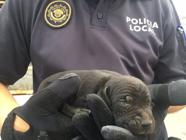Uno de los cachorros rescatados