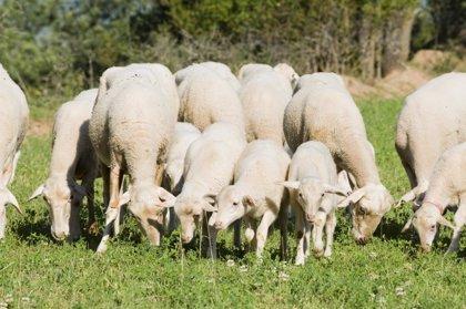 La DPT destina 40.000 euros para el programa de mejora ovina