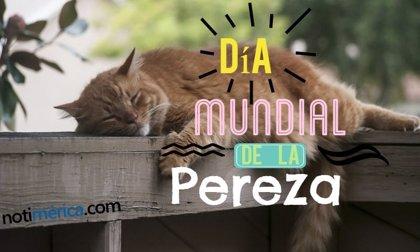 10 de agosto: Día Mundial de la Pereza, ¿qué motivo impulsó esta celebración?