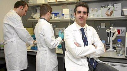 Esteller descubre una firma epigenética que predice la respuesta de inmunoterapia en cáncer de pulmón