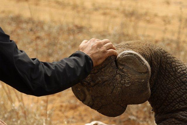 Sensores GPS contra la caza furtiva de rinocerontes