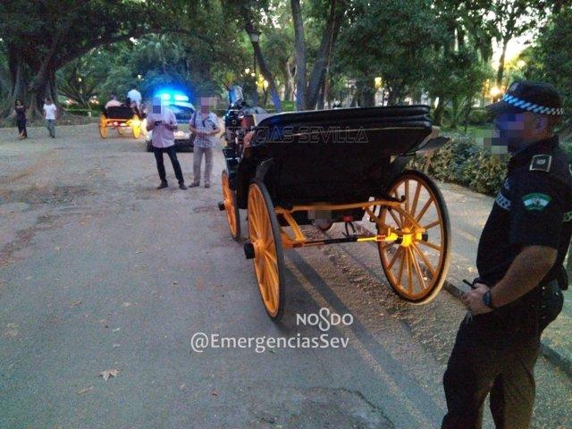 Cochero denunciado por la Policía Local de Sevilla.