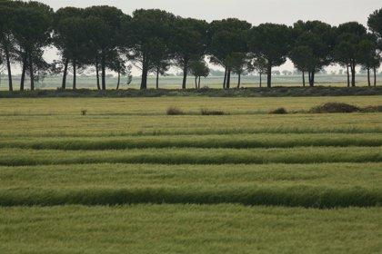 El sector del cereal ecológico aragonés ya cuenta con el apoyo del proyecto ECOCEREAL+