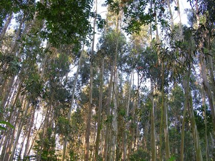 Foro reclama el uso de la biomasa forestal para generar empleo en el campo