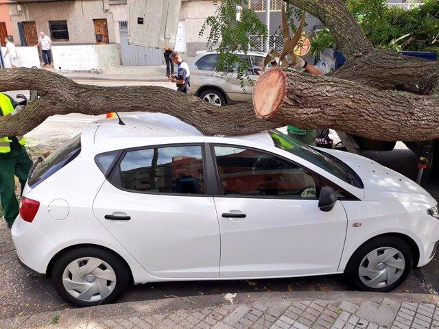 Vehículo afectado por la caída de la rama de un árbol